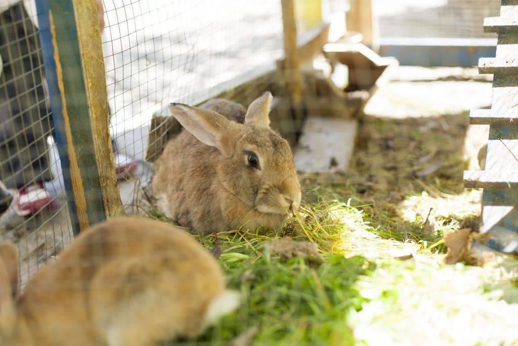Читать книгу самый полный справочник кроликовода александра снегова : онлайн чтение - страница 8