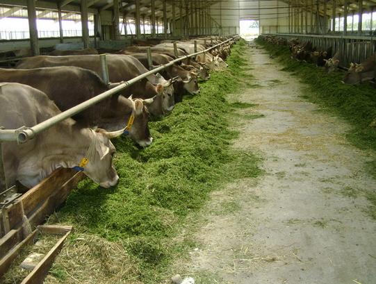 ᐉ кормушки для коров своими руками - zooon.ru