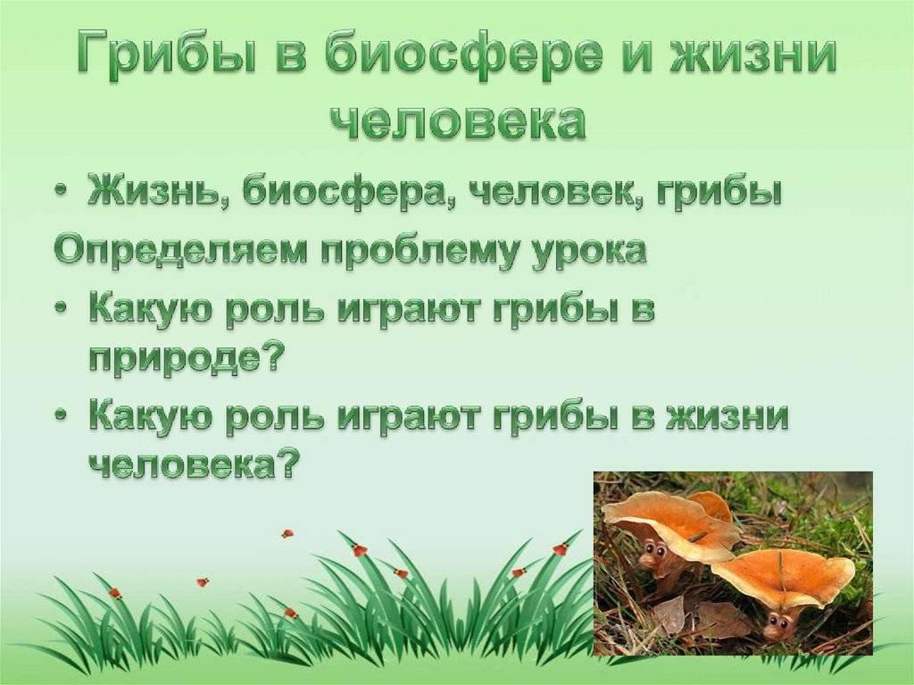 Какова роль грибов в природе: их значение