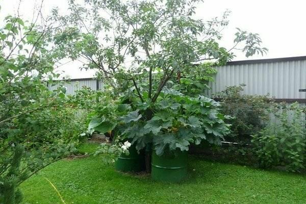 Выращивание кабачков в мешках: технология и правила, видео и фото