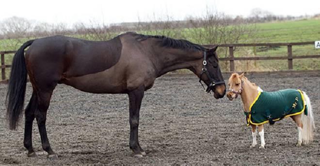 Как устроена лошадиная мини-ферма 2021