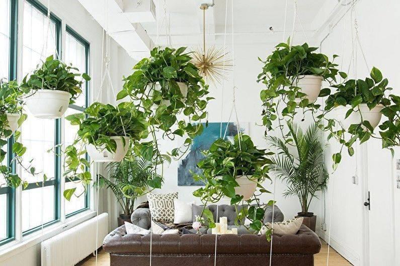 Ампельные: виды комнатных растений, их названия и фото, цветущие, тенелюбивые, суккуленты, многолетние и однолетние, декоративно лиственные, для кашпо и горшков