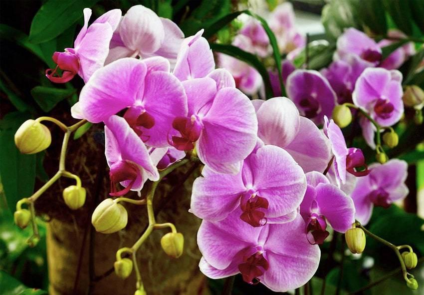 Как самостоятельно оживить орхидею
