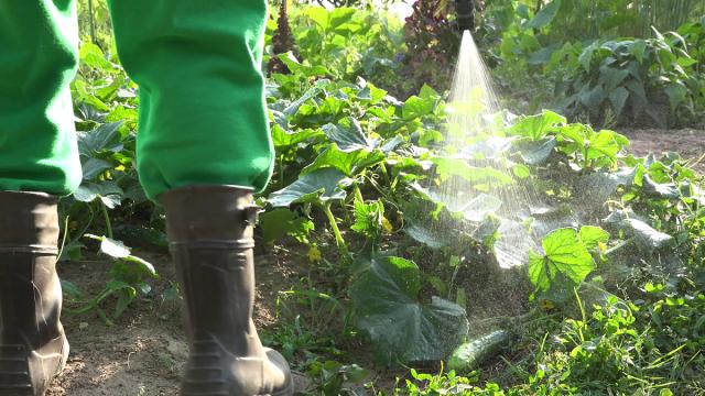 Подкормка огурцов дрожжами - лучшее удобрение для роста овощей