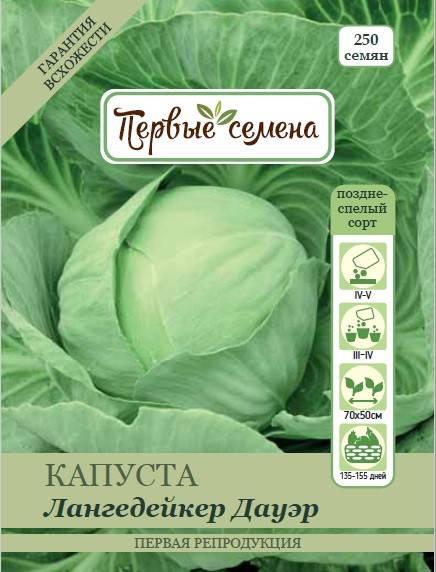 Капуста лангедейкер дауэр: описание сорта белокочанного, отзывы и фото семян