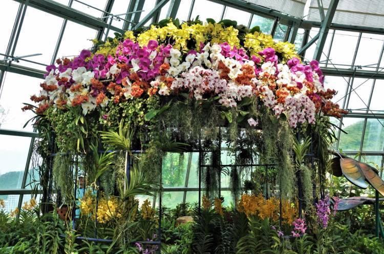 Как и где растет орхидея, может ли расти в земле, сколько и как быстро выпускает соцветий, а также в чем особенность содержания в домашних условиях?