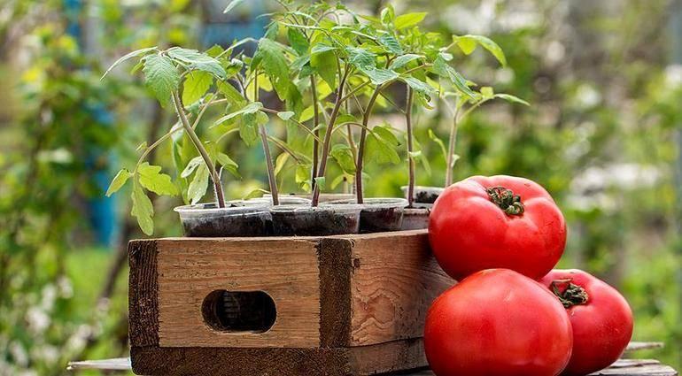 Правильный севооборот на огороде — что после чего можно сажать