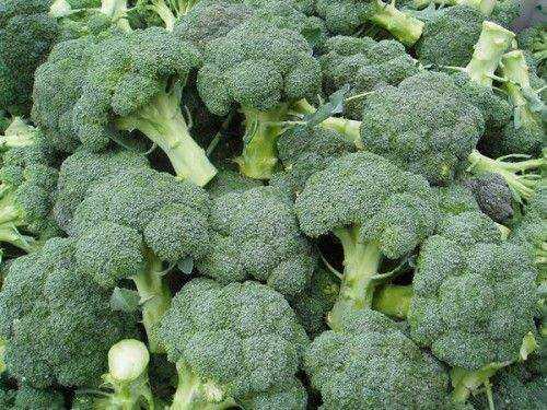Брокколи - выращивание, правила хорошего урожая