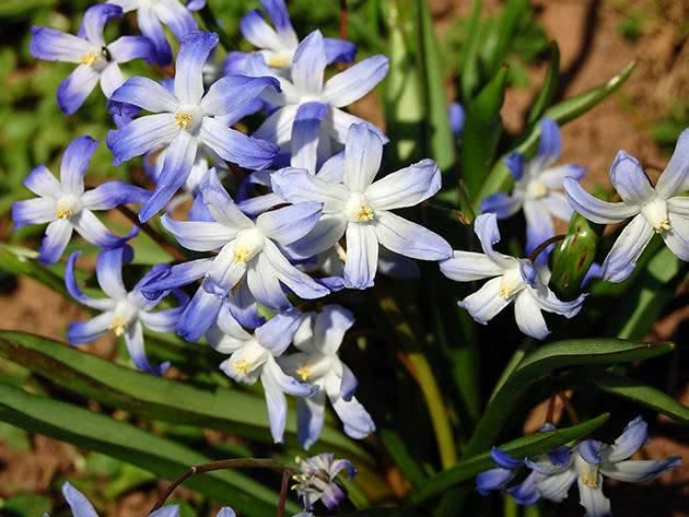 Посадка ирисов, как ухаживать за цветами, когда пересаживать после цветения