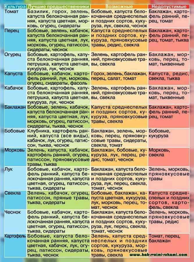 Соседство овощей в огороде: таблица совместимости