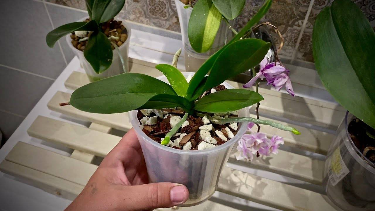 """""""актара"""" для комнатных растений: инструкция по применению, отзывы"""
