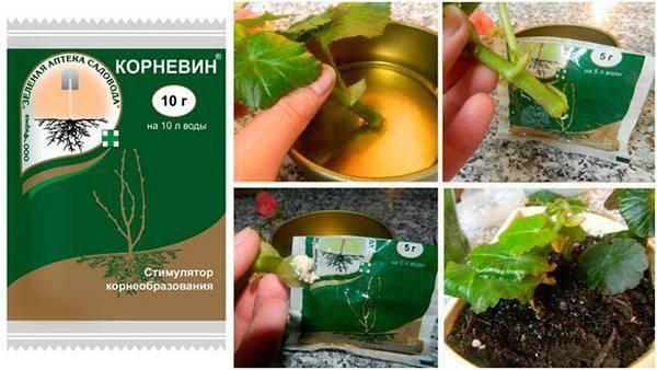 Гетероауксин – укоренитель для сада и огорода
