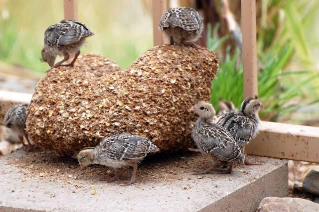 Птичий помет как удобрение (сухой, гранулированный): как приготовить настой, как поливать, как развести