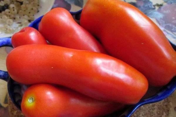 Томат казанова: описание сорта, отзывы, фото, урожайность | tomatland.ru