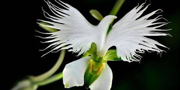 Разновидности орхидей: названия и фото