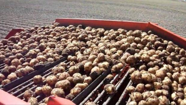 Картофель — минеральный состав
