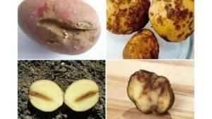 Виды нематод: золотистая картофельная нематода, корневая, стеблевая, листовая - фото и признаки русский фермер