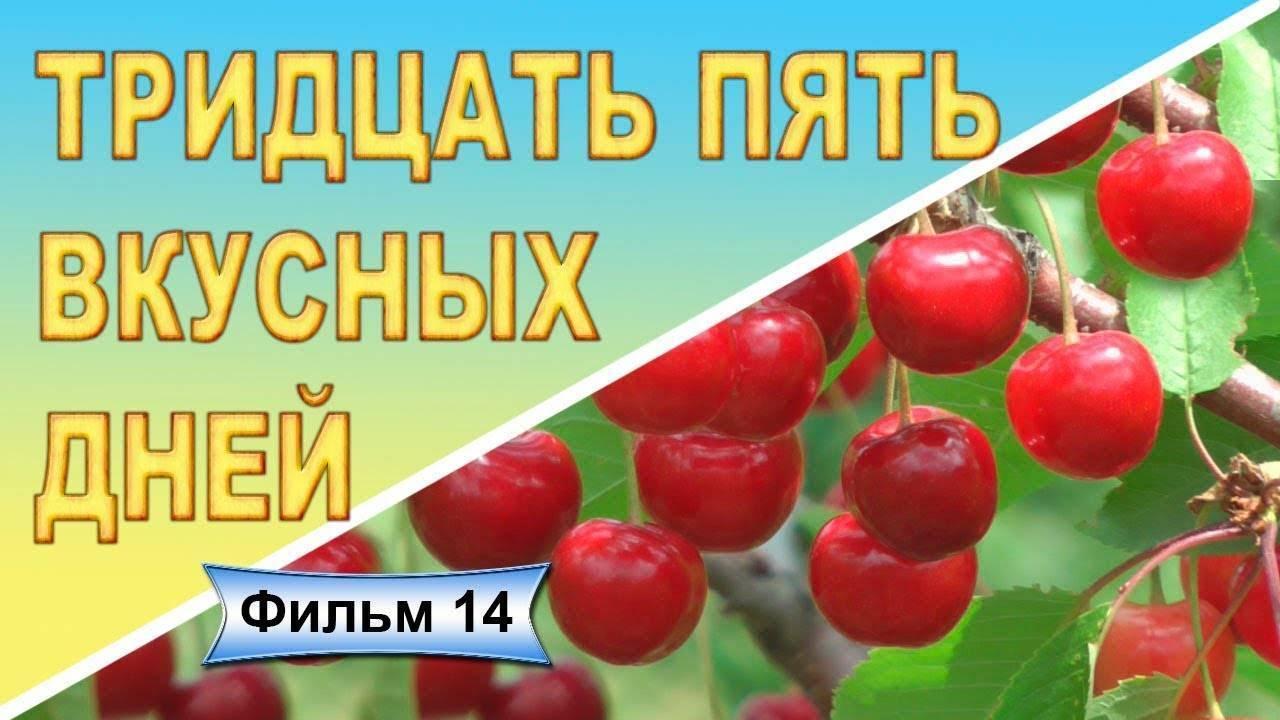 Черешня василиса — описание сорта, фото, отзывы садоводов
