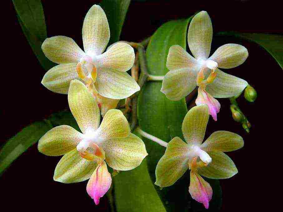 Грунт для орхидей: варианты органических, неогранических и покупных субстратов + популярные рецепты приготовления