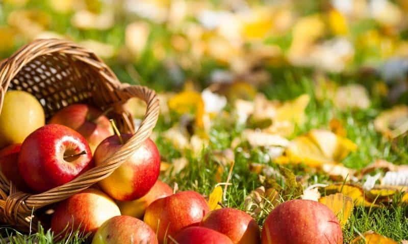 Как правильно сажать яблоню осенью: пошаговая инструкция