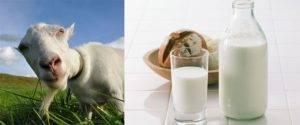 Вредноли мешать молоко счаем или кофе? отвечает эксперт