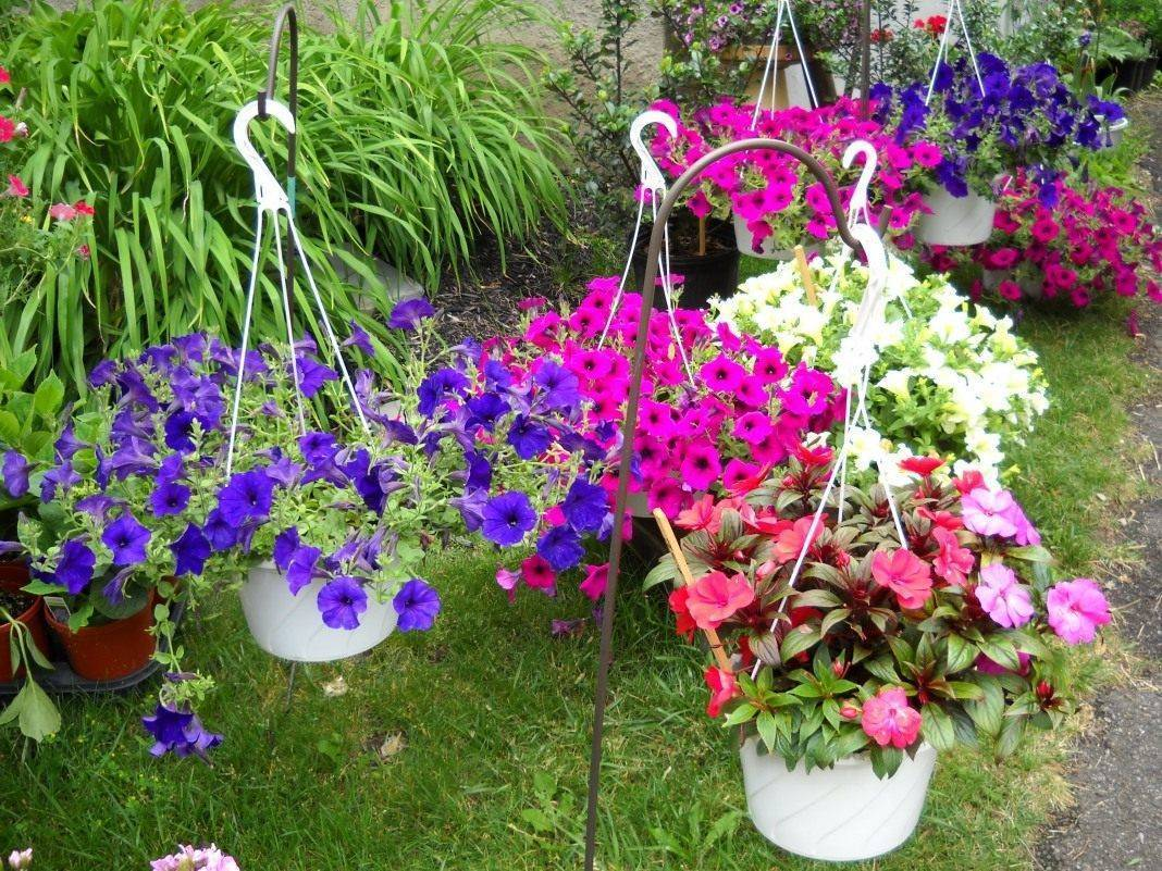 Почему вянет петуния и что делать? проверенные советы по оздоровлению цветка