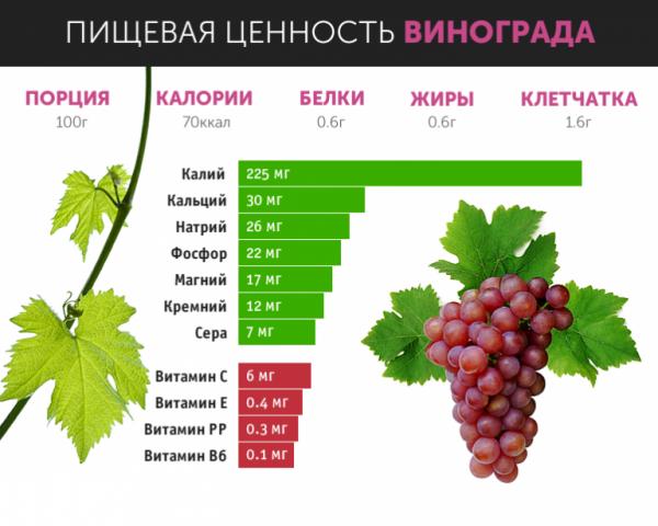 Лучшие сорта винограда без косточек: краткое описание, особенности