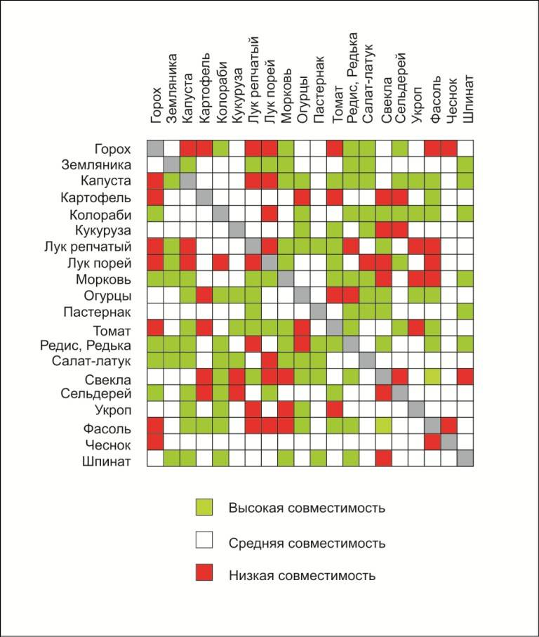 Таблица совместимости растений для смешанных посадок - дачные