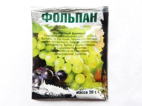 Обработка винограда железным купоросом осенью, основные нюансы