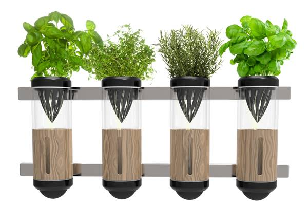 Технология гидропоники для домашних цветов