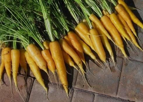 Конспект занятия «морковь— королева овощей» с использованием здоровьесберегающих и информационно-коммуникационных технологий