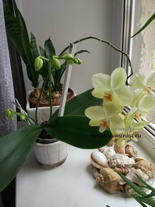 Уход за орхидеями в домашних условиях: как правильно ухаживать за этими комнатными цветами