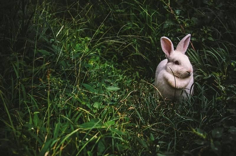 Кролики: описание и особенности жизни, интересные факты