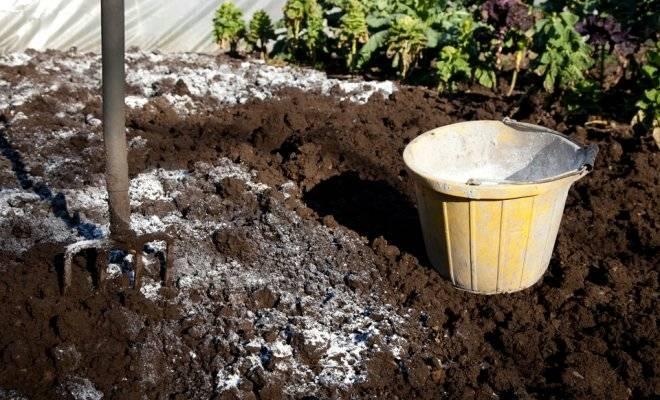 Вот и осень: 5 лучших способов обеззаразить почву в теплице