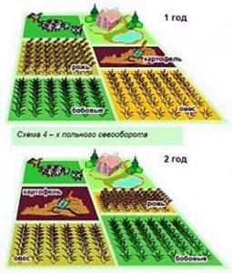 Какие пряные травы можно вырастить на своем огороде