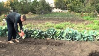 Как подготовить грядку под чеснок осенью