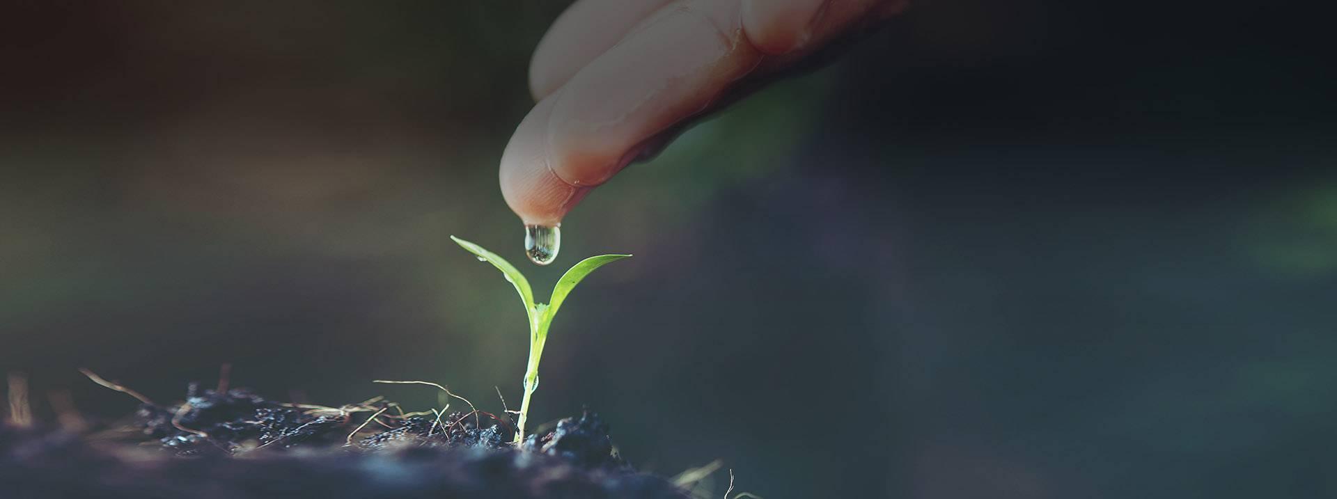 Сапропель – что это такое и как правильно использовать это удобрение – дачные дела