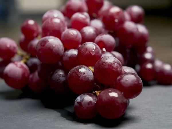 Новые сорта винограда для производства красных вин — виноград