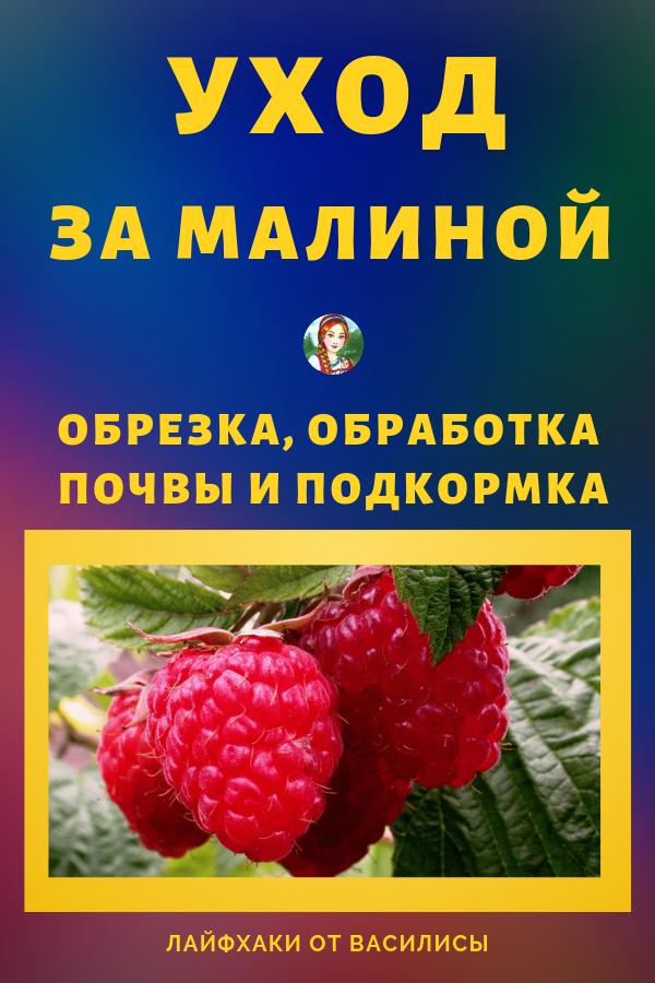 Подкормка малины весной для большого урожая: когда и чем подкормить