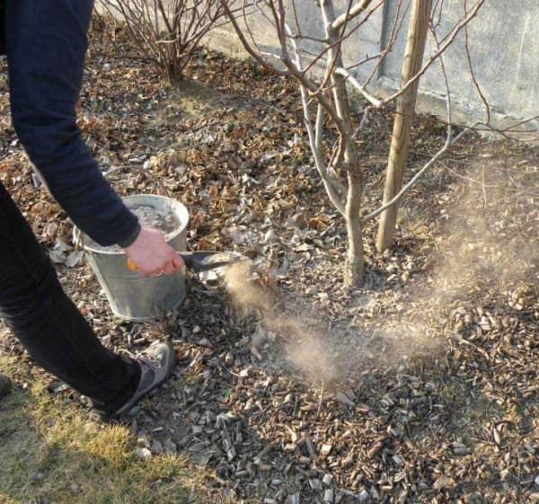 Как применять золу в качестве удобрения: польза подкормки, как приготовить