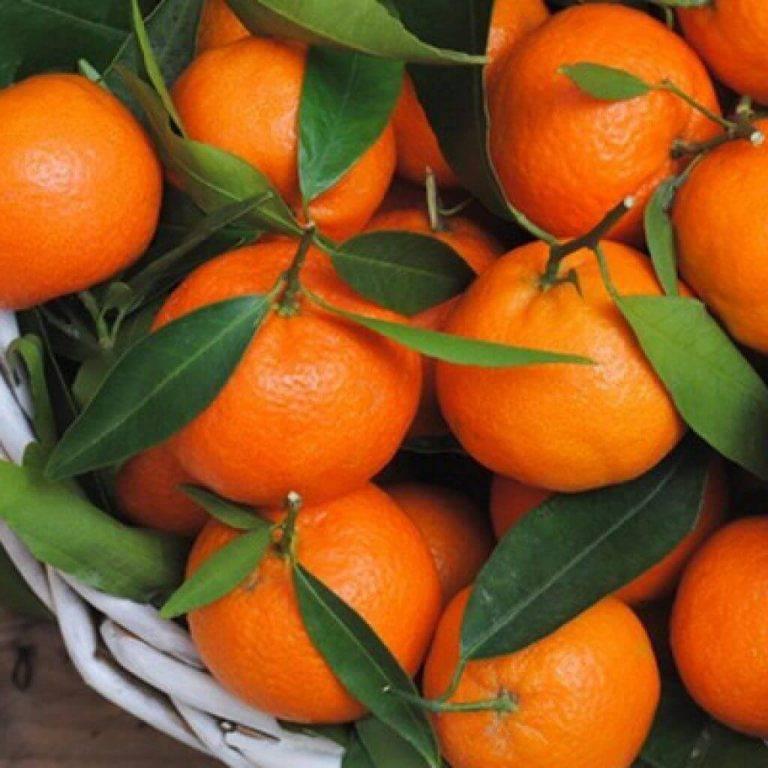 Клементины и мандарины, отличие и сходство гибрида, что это такое и откуда привозят