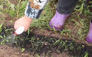 Как правильно и быстро прополоть морковь от сорняков