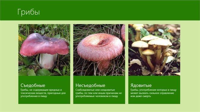 Характеристика грибов забайкальского края