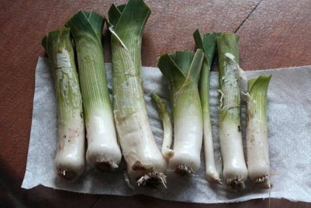 Когда убирать лук-порей в сибири и как правильно выращивать в открытом грунте