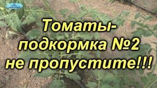 Подкормка томатов в теплице дедовскими методами
