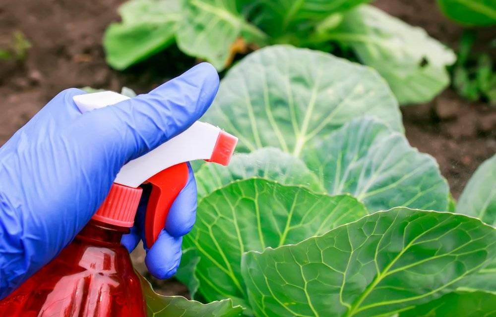 Чем обработать капусту от слизней