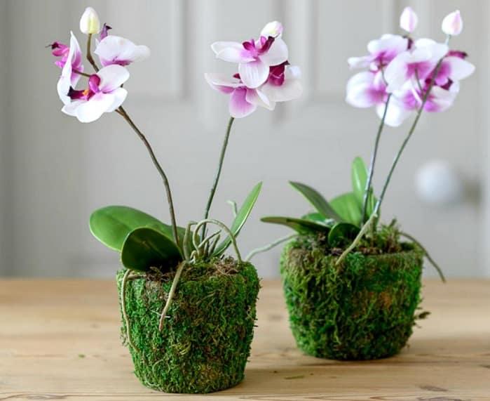 Выбираем удобрения для орхидей – лучшие магазинные и народные средства