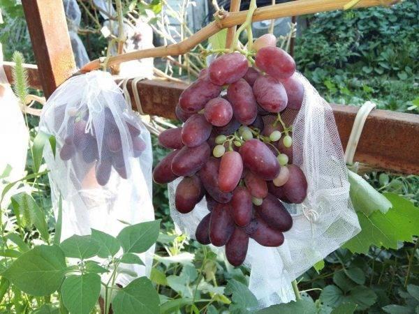 Виноград ризамат: описание сорта