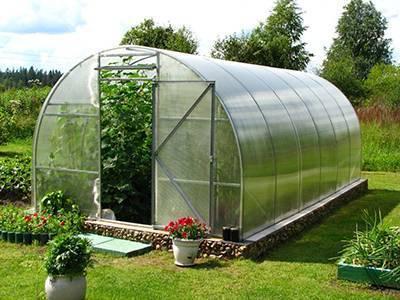 Выращивание огурцов в теплице из поликарбоната: сроки посадки и уход