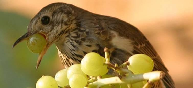 Ультразвуковой отпугиватель птиц: где и зачем можно купить, схема выполнения аксессуара своими руками